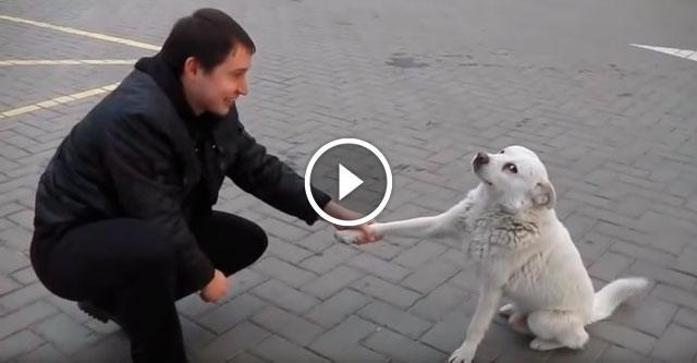 Невероятно дружелюбный уличный пёс