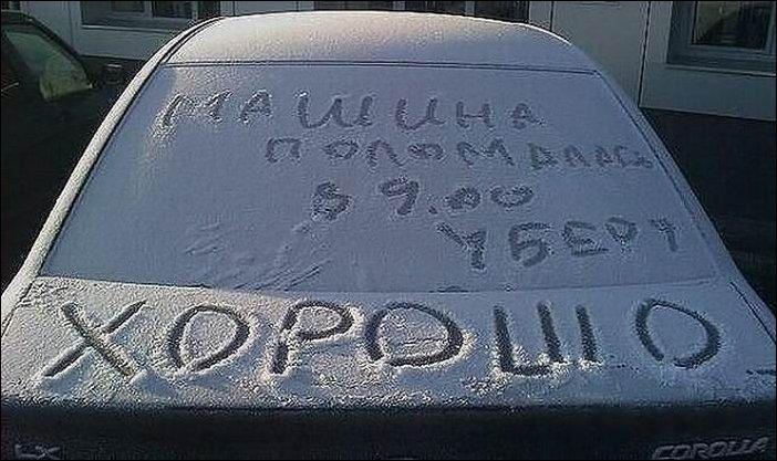Хомяк смешной, прикольные картинки с надписями а авто