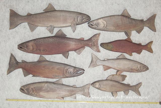 Лососевые рыбы Камчатки из дерева