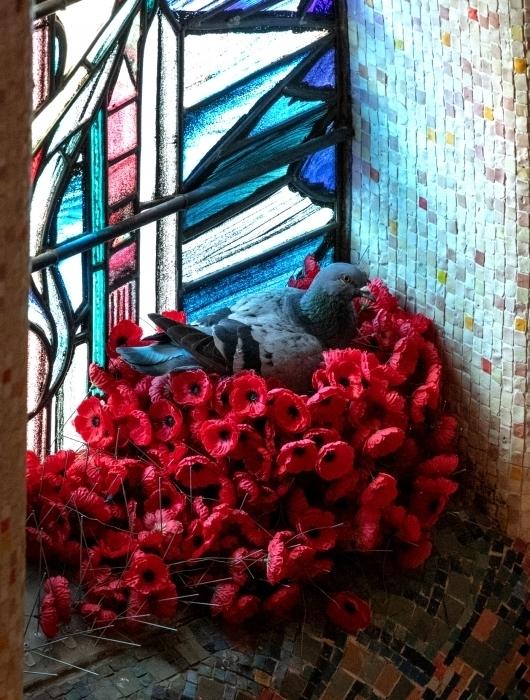 Голубь построил роскошное гнездо, собрав маки на военном мемориале птица, войны, птицы, связь, после, голуби, начали, мировой, цветы, чтобы, Австралии, передавали, сообщения, самые, критические, моменты, войск, припасов, важные, стали