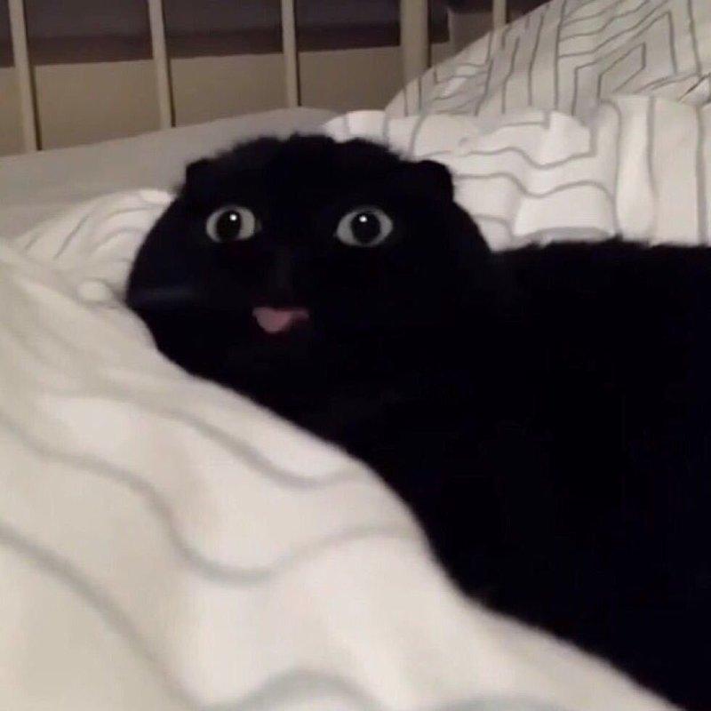Эти кошки чертовски похожи на людей!