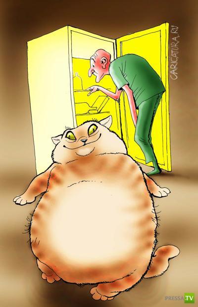 Брюхоногий котик