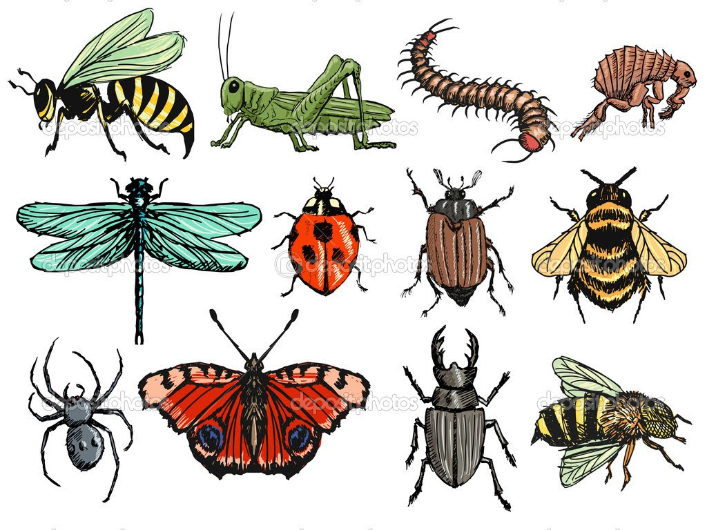 Тест: какое ты насекомое?