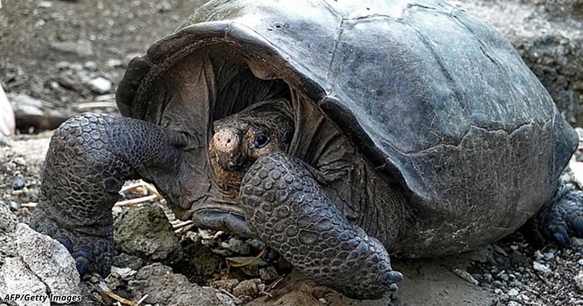 Ðа ГалапагоÑах нашли гигантÑкую черепаху: ÑчиталоÑÑŒ, что Ñтого вида больше нет