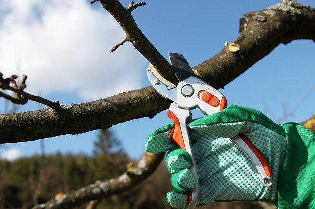 Что нужно знать про обрезку сада: инструменты, технологии, сроки. Часть 2