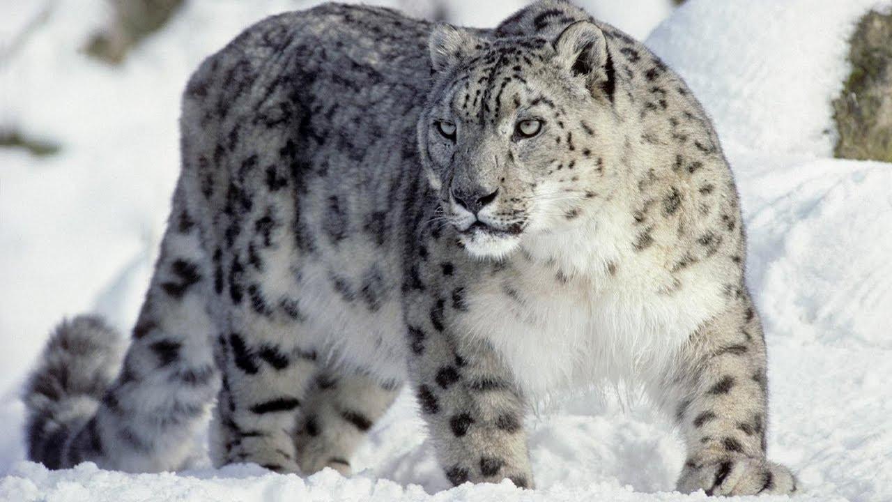 сайте картинки редких животных занесенные в красную одно самых
