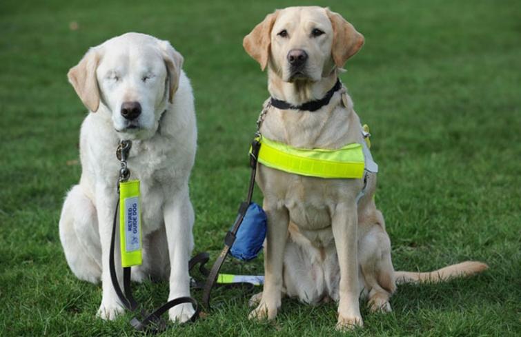 Трогательная история пса-поводыря, который сам остался без зрения