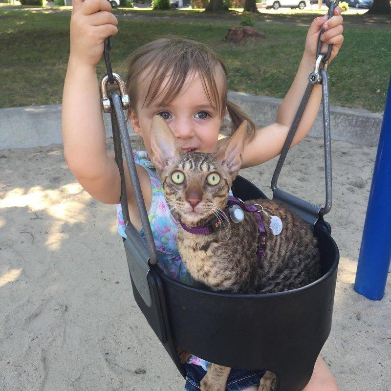 """Шокированный котейка не знал, что скрывается за словом """"качели""""... дети, дружба, животные, кошки, ребенок, собаки"""