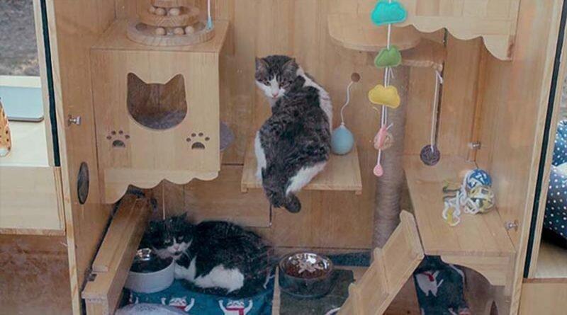 Китайский инженер построил приют для бездомных кошек со встроенной системой распознавания лиц добро, дом, животные, забота, кошки, милота, приют, система распознавания лиц