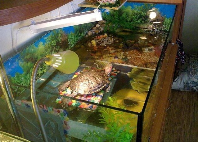 Чем кормить красноухую черепаху кроме корма