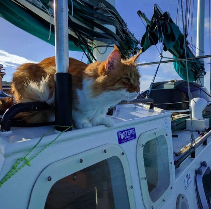 Мейн-кун Скатти помогает глухому яхтсмену ходить по всем морям