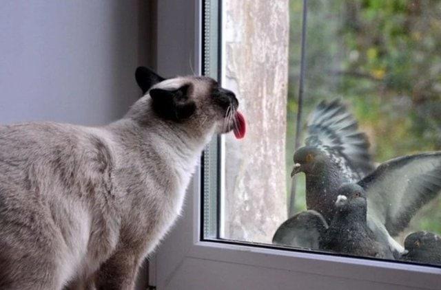 Действенные методы по избавлению от надоедливых голубей на подоконнике голубей, балкона, голуби, подоконника, отпугивания, фольги, чтобы, можно, помощью, спугнуть, Просто, избавиться, использование, балконе, способ, отпугнуть, будет, помогут, нескольких, отвадить