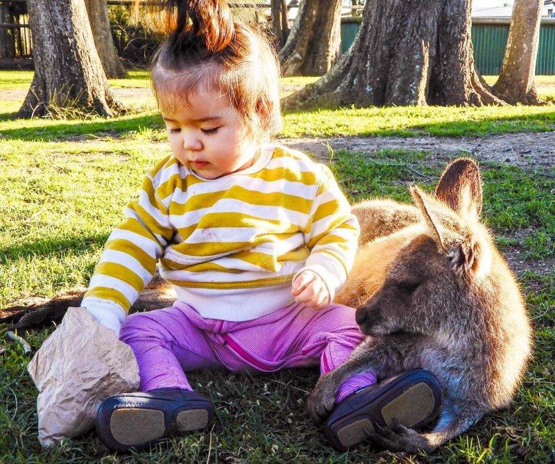 Даже кенгуру настолько очарованы милотой детей, что позволяют сидеть рядом. дети, дружба, животные, кошки, ребенок, собаки