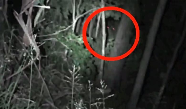 В австралийских лесах заснял…