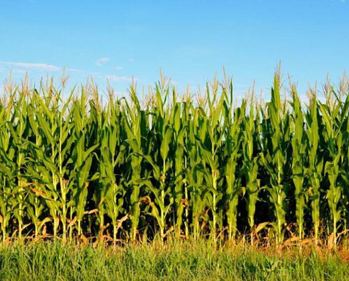9. Угроза голода люди, потепление, природа