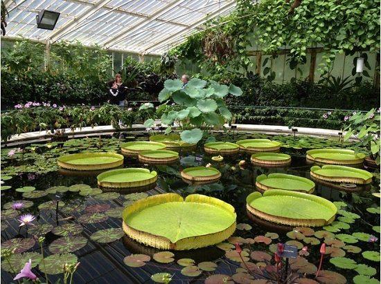 Королевские ботанические сады Кью2