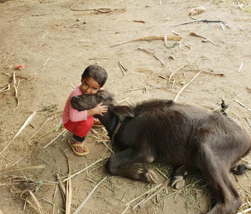 Они оба любят теплые объятия. дети, дружба, животные, кошки, ребенок, собаки