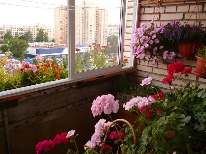 Цветочные идеи для украшения балкона