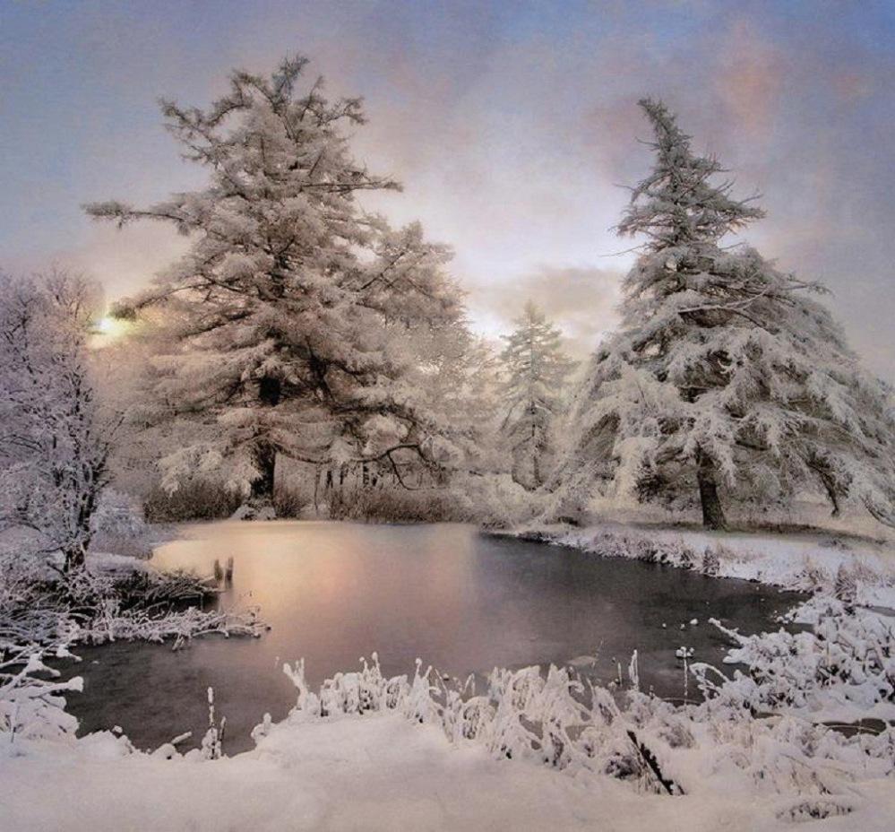 Подсолнухами, картинка с наступлением зимы