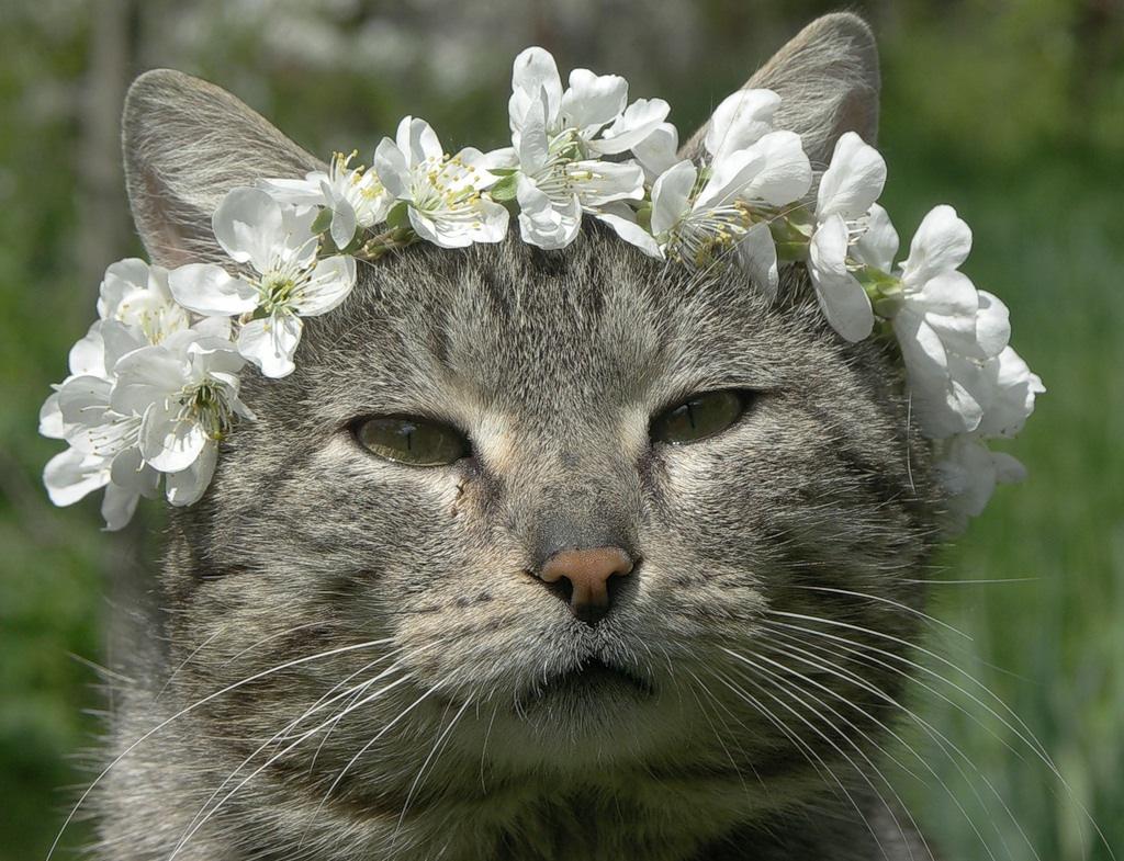 Весна смешное картинки, открытка для