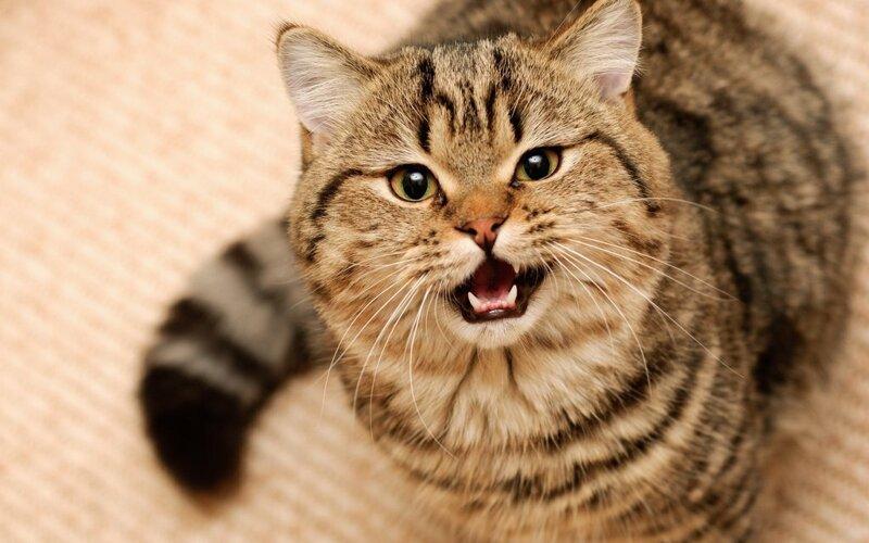 С котом очень повезло животные, коты, юмор