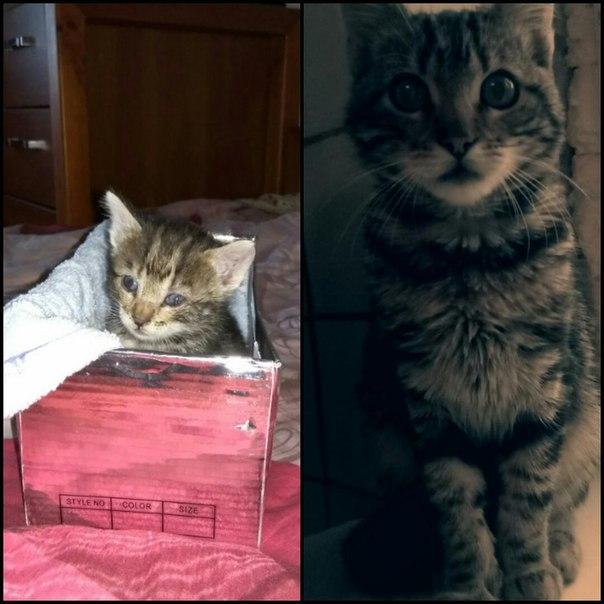 Папа нашел 2-х недельного котёнка под магазином. Не знали что с ним делать,...
