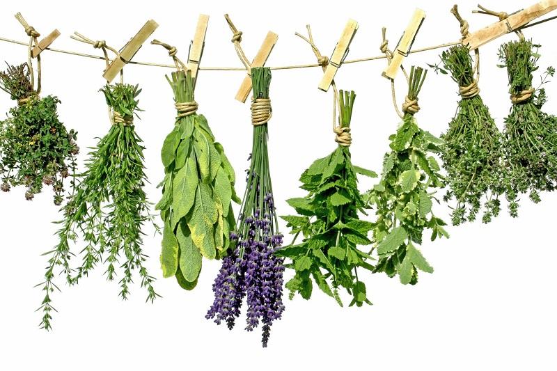 Не спешите покупать антибиотики - попробуйте эти травы! Мощнейшие лекарства от матушки-природы