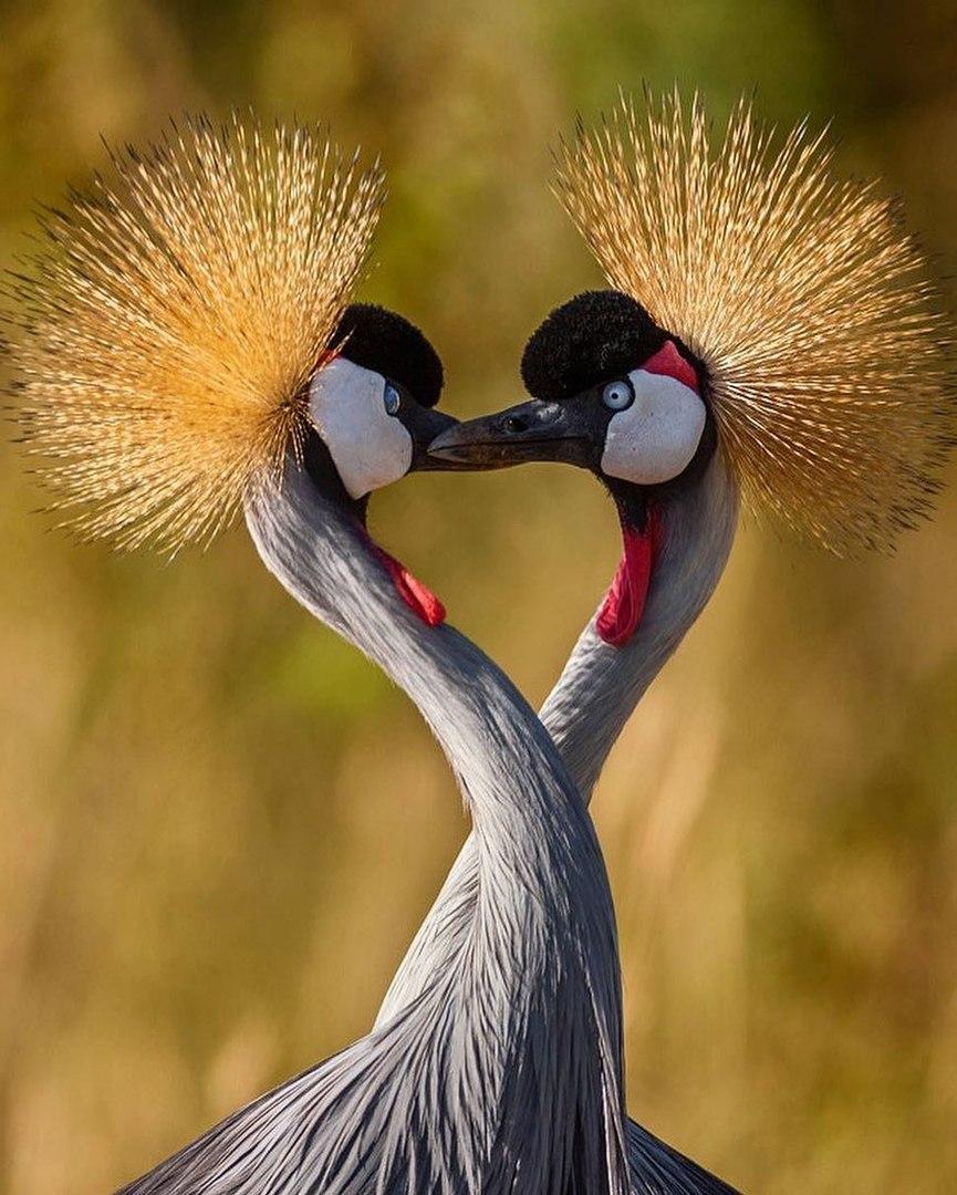жизни смерти фото поцелуя птички год прошел момента