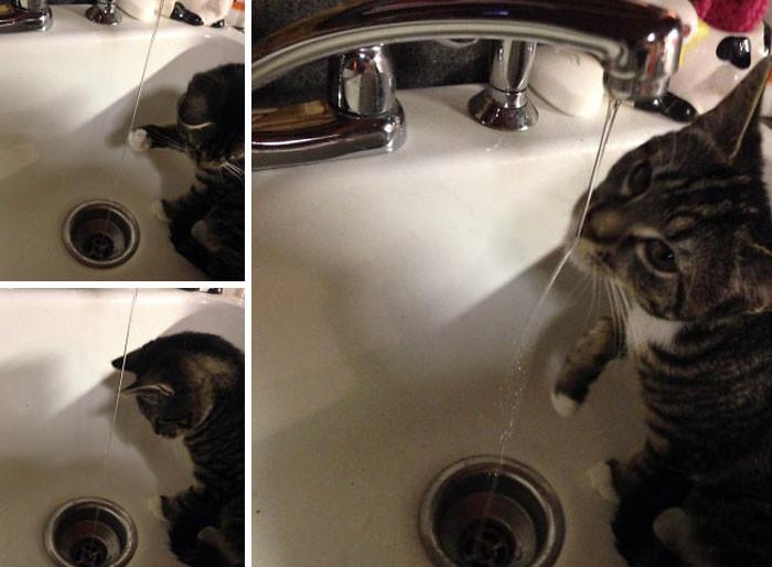 Любитель потусить в раковине банный день, ванна, животные, купание, шок