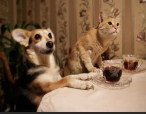 Кошка и гости