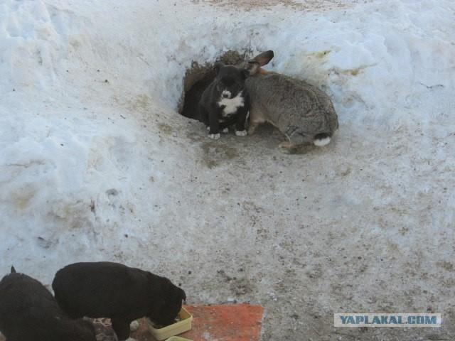 Кролик спас щенков и заменил им мать