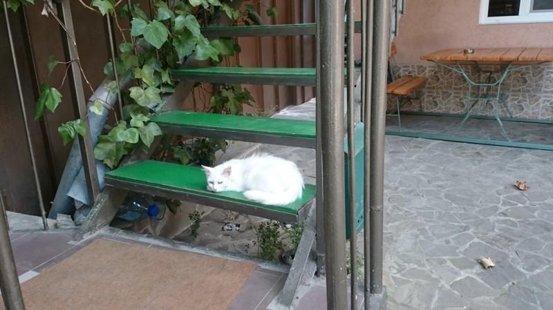 Коты и кошки Ялты