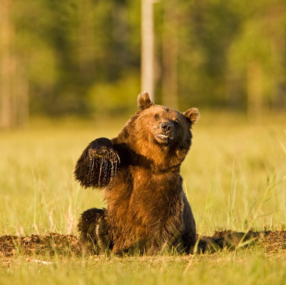 Фото или картинки с медведем