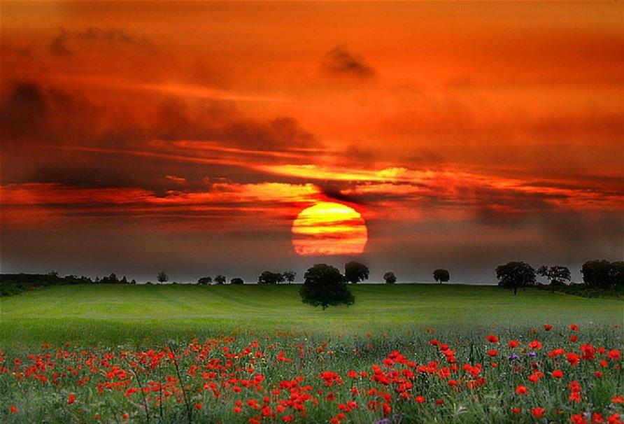 Замечательные фотографии природы для позитива и хорошего настроения