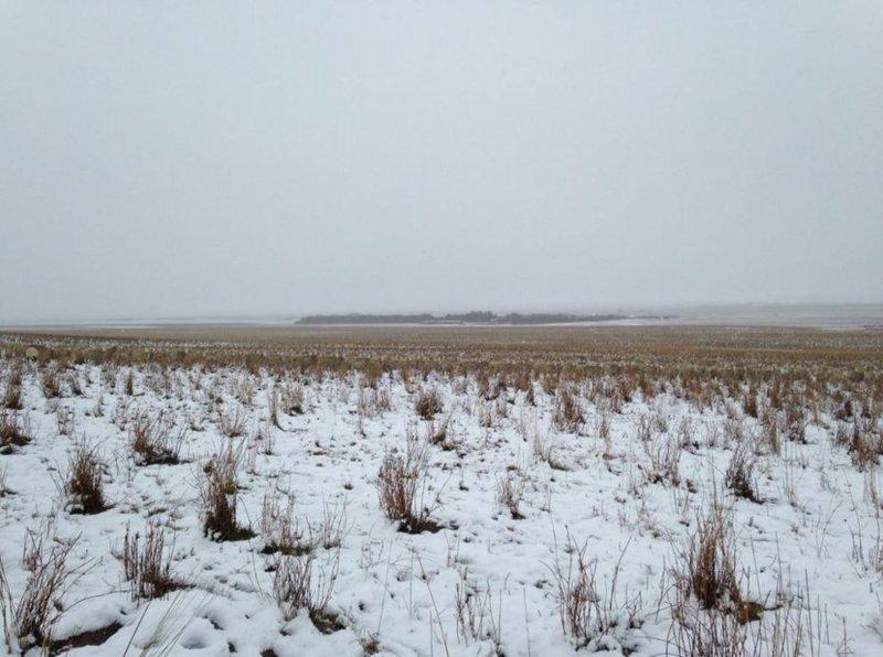 3. На этой картинке 550 овец, можете найти их? головоломки, задача, иллюзия, интернет, прикол