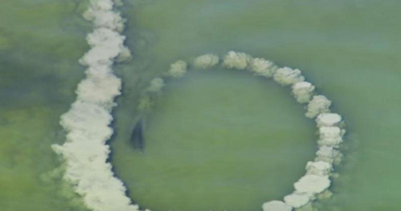 Дельфины выстроились в ряд и начали плавать по кругу. Невероятное зрелище, которое имеет особый смысл!