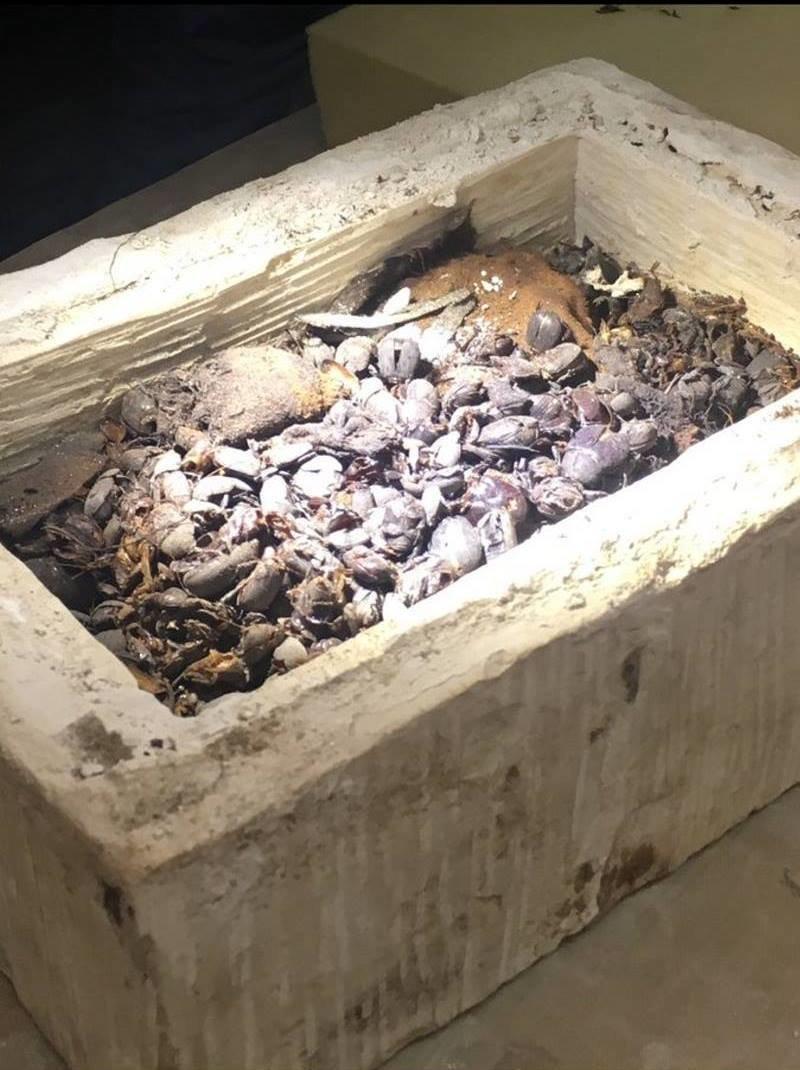 Еще одна коллекция мумий скарабеев была обнаружена внутри меньшего саркофага Египт, в мире, гробницы, кошки, мумия, находка, пирамиды