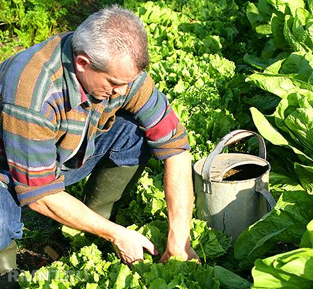 Органическое земледелие. Приручаем сорняки