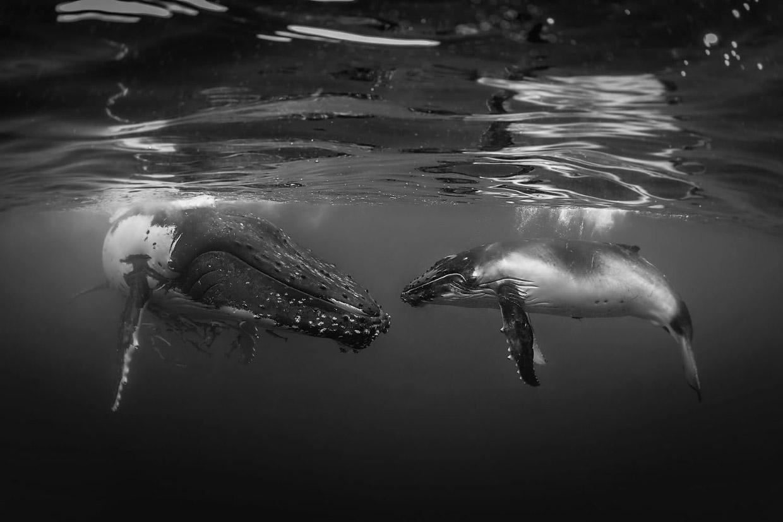 Невероятные кадры победителей конкурса подводной фотографии