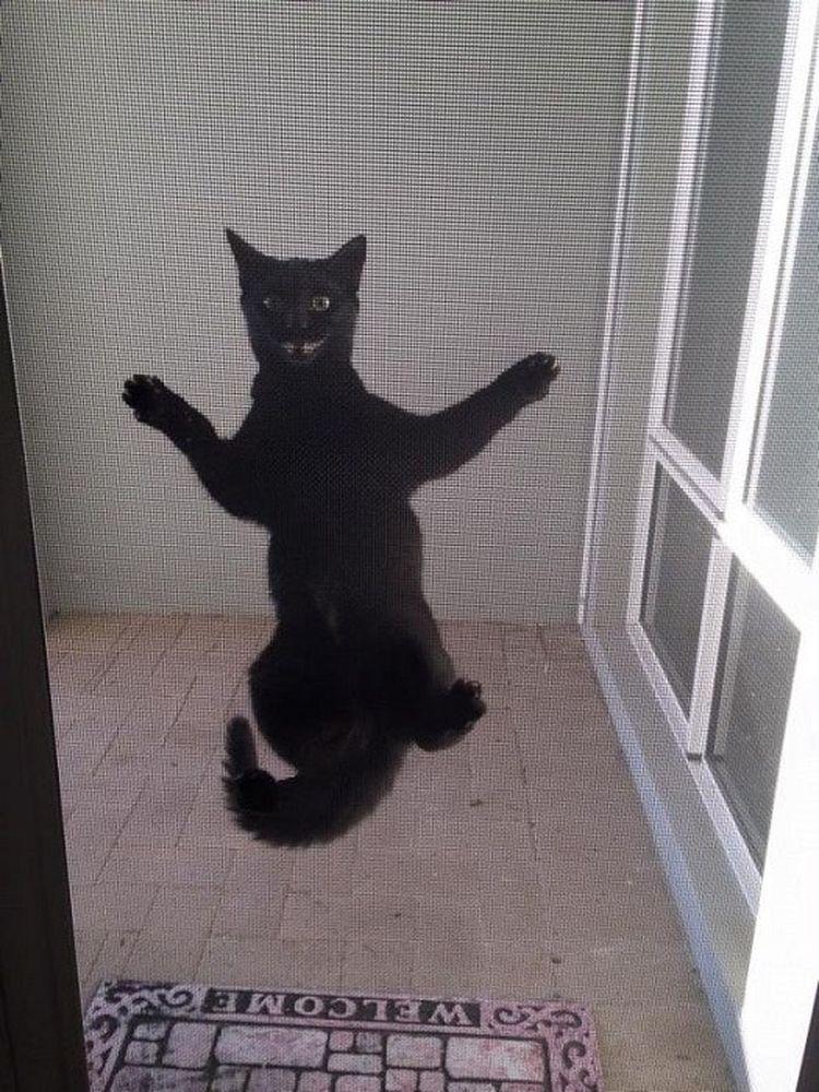 15 доказательств тому, что коты - самые странные существа на земле!