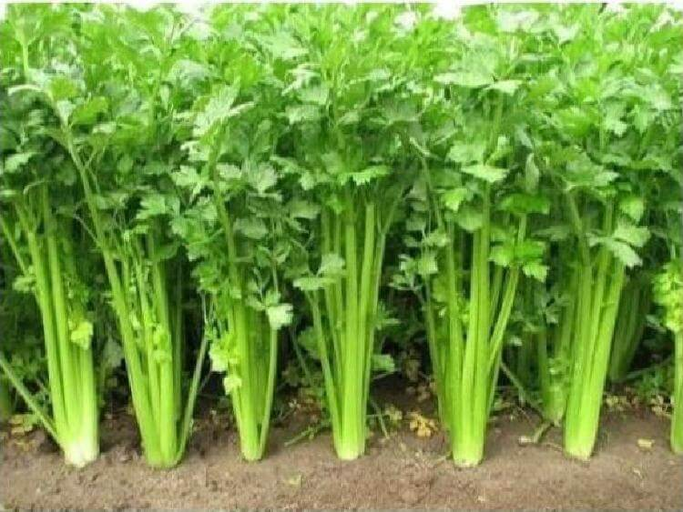 Готовы поспорить, что вы никогда не видели, как растут эти 20 продуктов еда,интересное,продукты,растения
