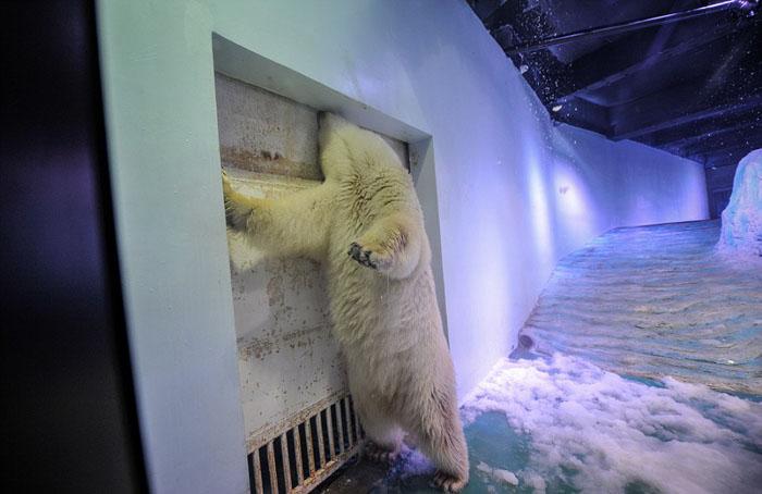 В клетке медведя нет никаких развлечений.