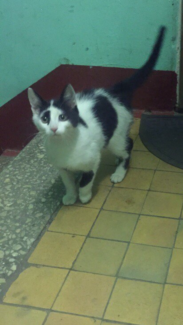 Москва. Молоденького котика пустили погреться в подъезд, ищут дом. Посмотрите, как ему страшно снова оказаться на улице.