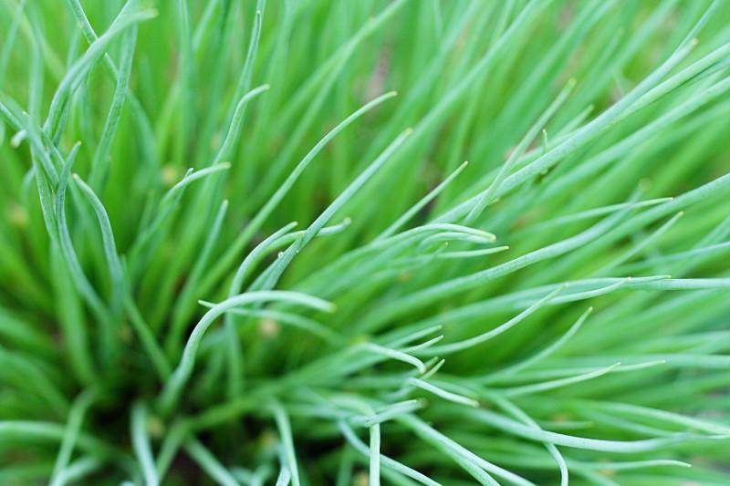10 трав, которые помогут вам стать сильнее и здоровее. Изображение номер 2