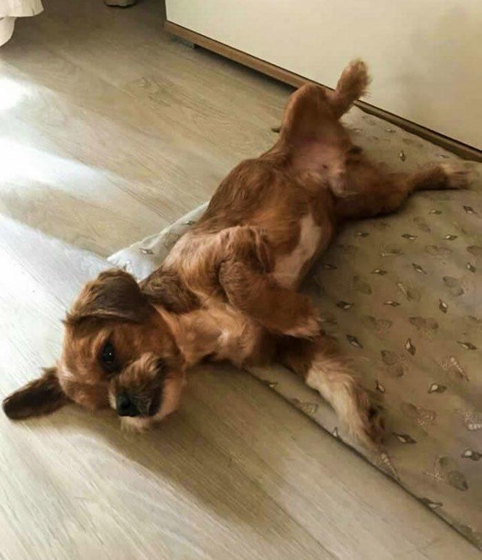 Постепенно пес стал обрастать шерстью, а его здоровье - крепнуть восстановление, животные, лечение, пес, преображение, спасение, хорватия