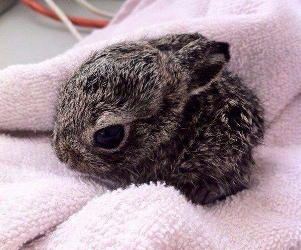 Двухнедельный кролик :3