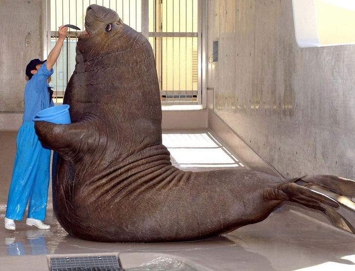 животные громадных размеров фото под