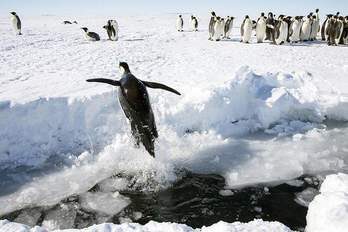 Антарктида - единственный континент, где нет рептилий Антарктика, антарктида, интересно, ледяной континент, познавательно, секреты Антарктики, удивительно, факты
