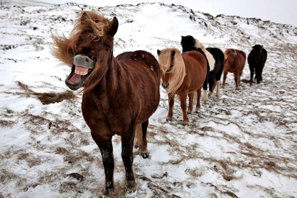 Картинки с приколами о лошадях, красивые картинки