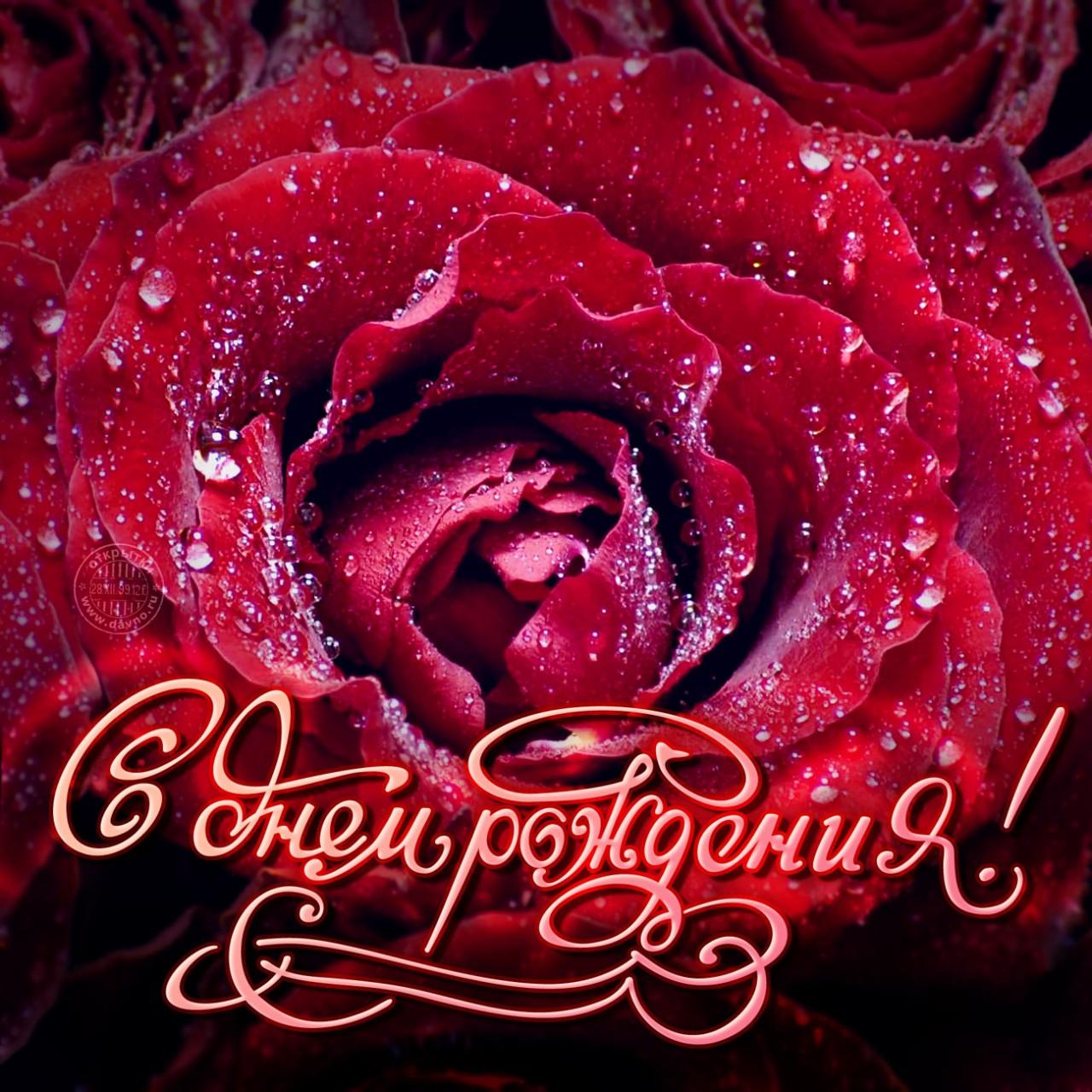 Открытки с днем рождения женщине красивые по имени роза